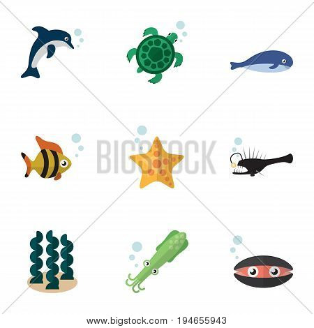 Flat Icon Sea Set Of Tortoise, Octopus, Sea Star And Other Vector Objects. Also Includes Humpback, Octopus, Dolphin Elements.