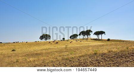 Rural Landscape, Portugal