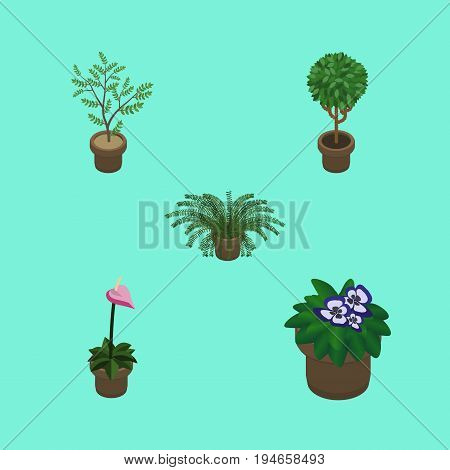 Isometric Houseplant Set Of Flowerpot, Plant, Tree And Other Vector Objects. Also Includes Flowerpot, Plant, Houseplant Elements.