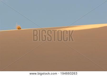 Dry Bush in Desert