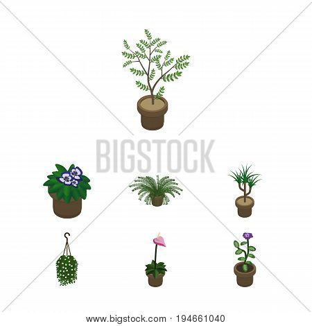Isometric Houseplant Set Of Fern, Houseplant, Flower And Other Vector Objects. Also Includes Flowerpot, Flower, Hanging Elements.