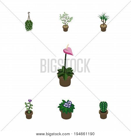 Isometric Houseplant Set Of Flowerpot, Fern, Houseplant And Other Vector Objects. Also Includes Blossom, Peyote, Cactus Elements.