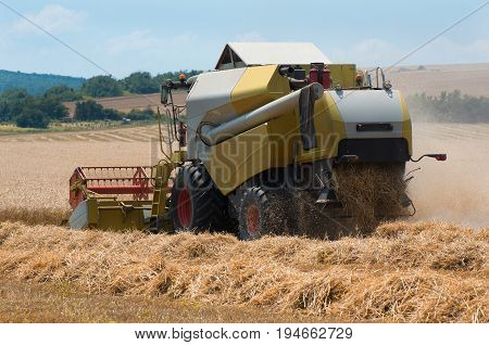 Harvesting of wheat . Grain harvesting with combine