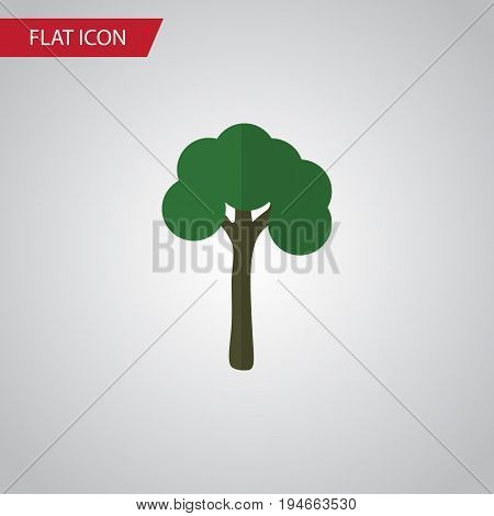 Isolated Garden Flat Icon. Evergreen Vector Element Can Be Used For Evergreen, Tree, Timber Design Concept.