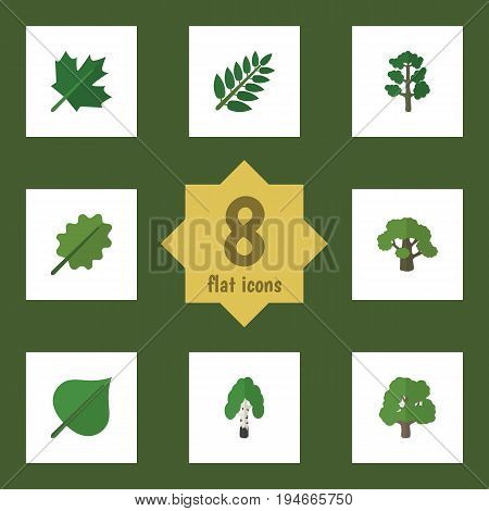 Flat Icon Nature Set Of Alder, Hickory, Oaken And Other Vector Objects. Also Includes Alder, Birch, Tree Elements.