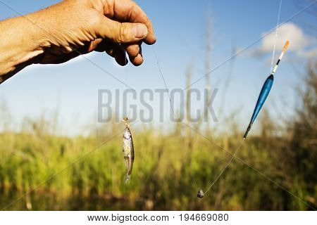 small fish placed on the hook as bait