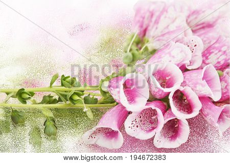 Background with bouquet of beautiful purple flowers Foxglove