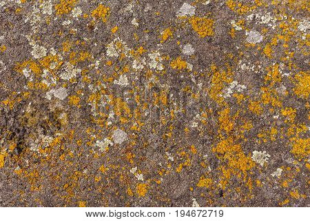 Old stone wall texture with moss on it yellow moss background