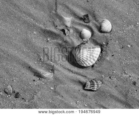 Black And White Broken Seashells On Wet Sand Beach At Hot Sun Summer Day