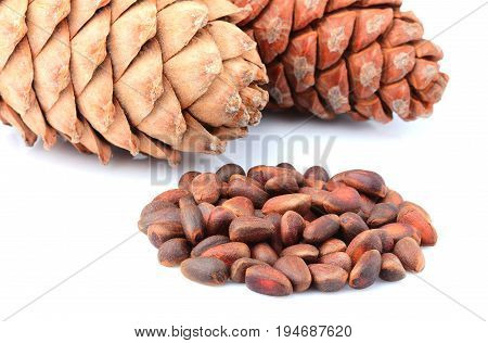 Cedar cones with nuts isolated on white background.