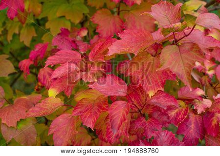 Autumn leaves of different colors in nature