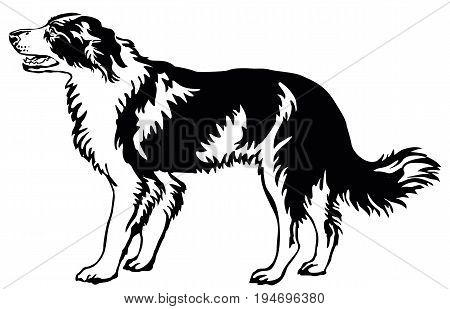 Decorative portrait of standing in profile dog border collie vector isolated illustration in black color on white background