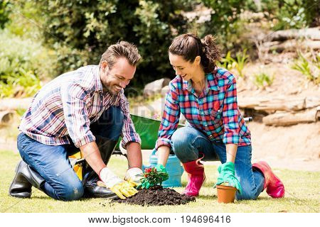 Full length of smiling yuong couple planting at lawn on sunny day