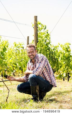 Portrait of smiling young man touching grapes at vineyard