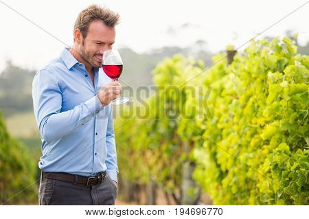 Man smelling red wine while standing at vineyard