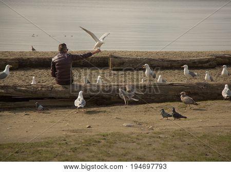 Wide shot male feeding seagulls beach background