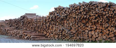 lumber yard business timber stacked forest industry environment lumbering wood