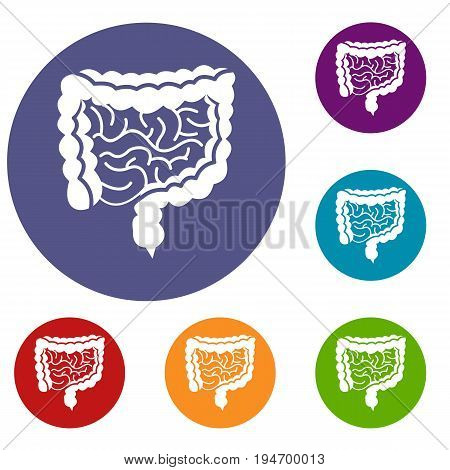 Intestines icons set in flat circle reb, blue and green color for web