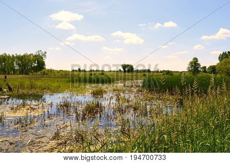 A wetland landscape during a hot summer day