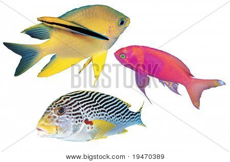 Colorful fishes isolated on white background