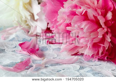 Peony bunch lay on white lace background