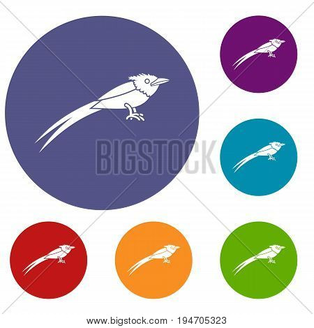 Asian paradise flycatcher icons set in flat circle reb, blue and green color for web