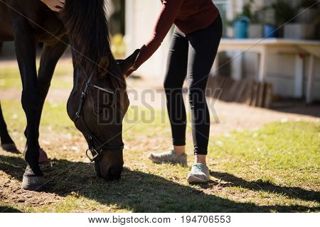 Woman caressing the horse on a sunny day