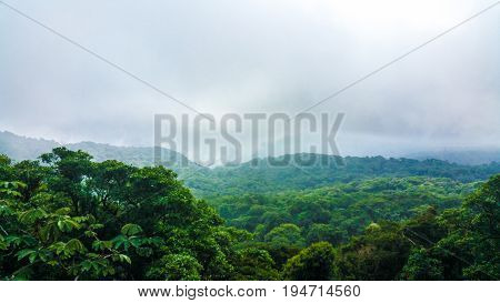 Fog hovering over green dense rainforest in Costa Rica