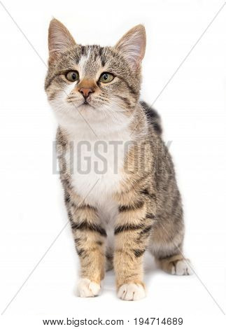 cat on a white background . A photo