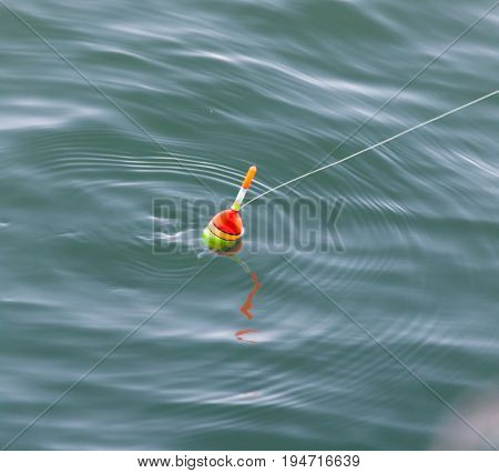float for fishing in water . Photo of wildlife in the park