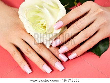 Manicured nails with pink nail polish. Manicure with nailpolish. Fashion art manicure with shiny gel lacquer. Nails salon