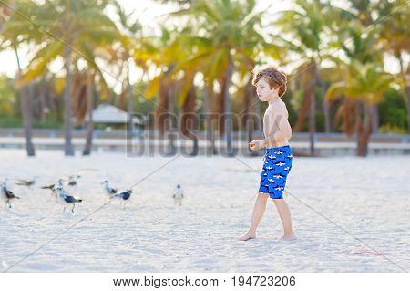 Adorable active little kid boy having fun on Miami beach, Key Biscayne. Happy cute child feeding seagull birds on sunny warm day near palms.
