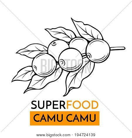 Hand drawn vector icon superfood camu camu. Sketch Illustration in vintage style. Design Template Healthy food.