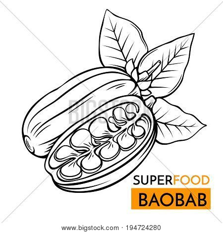 Hand drawn vector icon superfood baobab. Sketch Illustration in vintage style. Design Template Healthy food.