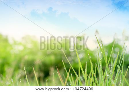 beautiful nature, good morning dew grass feeling fresh, background for natural style of life