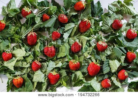 Many strawberries on green leaves of current
