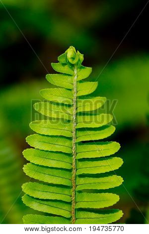 Green Fern Frond close up in rain forest