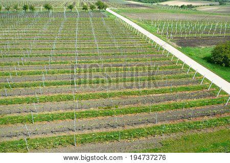 Aerial view of a farm winery on spring in green grapevine, Velke Pavlovice wine region, Czech Republic
