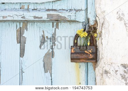 Old metal padlock with yellow flowers on a scratched wooden door