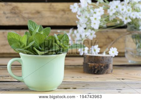 green cup with banch of fresh and green melissa on wooden table