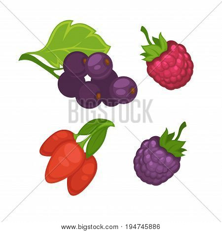 Fresh berries collection on white vector poster in graphic design. Bunches of red barberry and currant with green leaves, rosy raspberry and dark blackberry. Ecological fruits healthy for people