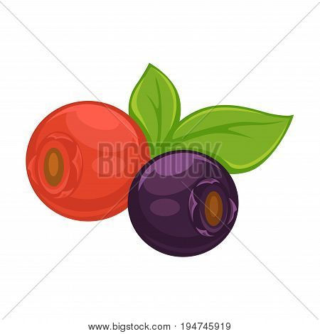 Wild ripe dog-rose with leaves and sweet healthy blueberry isolated vector illustration on white background. Cartoon small delicious berries that grow on bushes full of vitamins and natural juice.