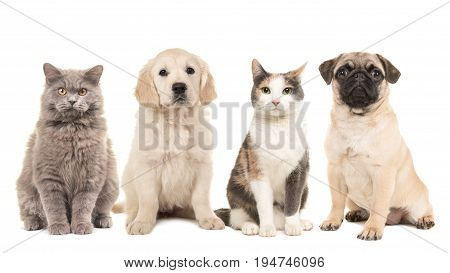 Group of pets puppy dogs and adult cats on a white background