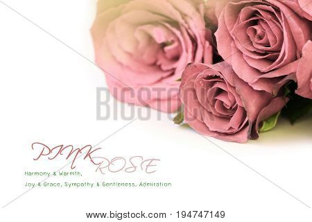 Pink roses bouquet with sample text on white background.