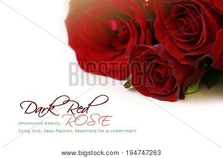 Red roses bouquet with sample text on white background