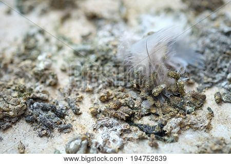 Bird droppings on cement background , close up