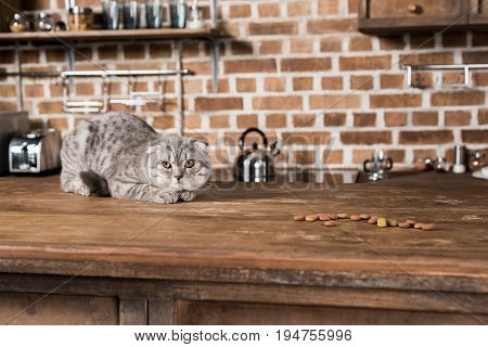 Grey Scottish Fold Cat Lying On Wooden Tabletop With Cat Food
