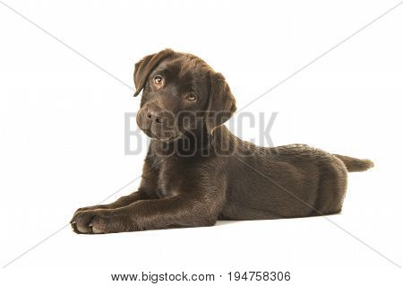Chocolate labrador retriever puppy lying down on the floor seen from the side looking at the camera isolated on a white background