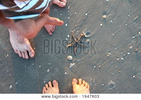 Sand Feet Starfish