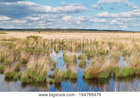 blue sky reflected in swamp water in summer